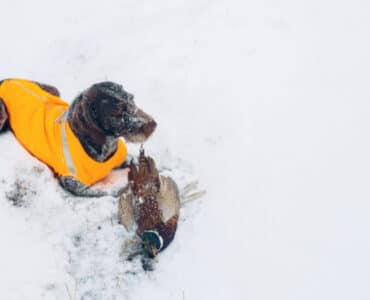 Winter Hazards for Hunting Dogs